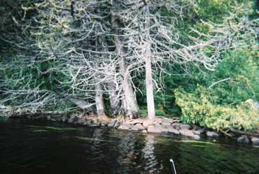 Can_06_gnarly_trees_1_8100607