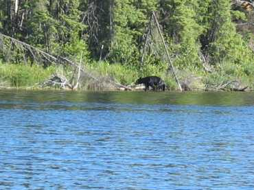 Can_06l_the_bear_886_8676